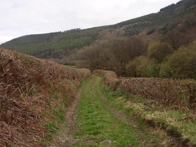 Llwybr Ceffyl Clynsaer Bridleway, Cynghordy