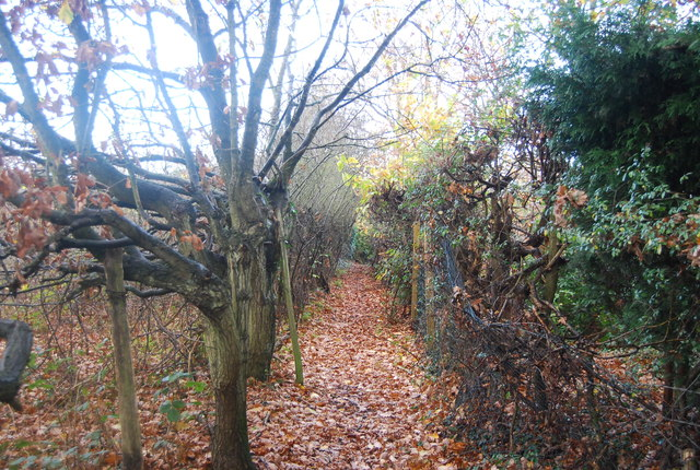Footpath by an orchard