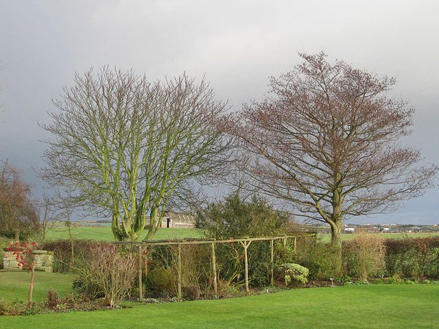 Winter trees, Killerby