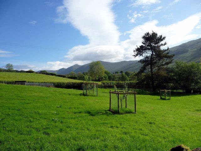 Apple Trees, Troutbeck, Cumbria
