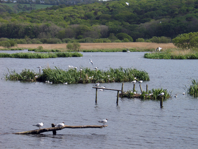Pools and reed bed at Leighton Moss
