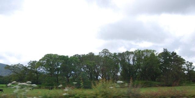 Mungo's Hill Wood