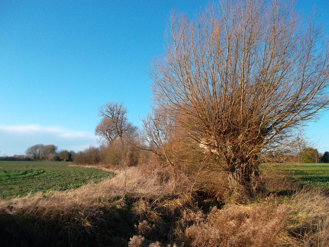 Small Stream near South Moreton