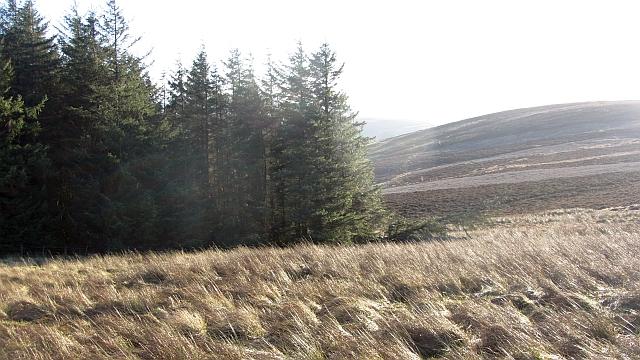 A woodland's corner