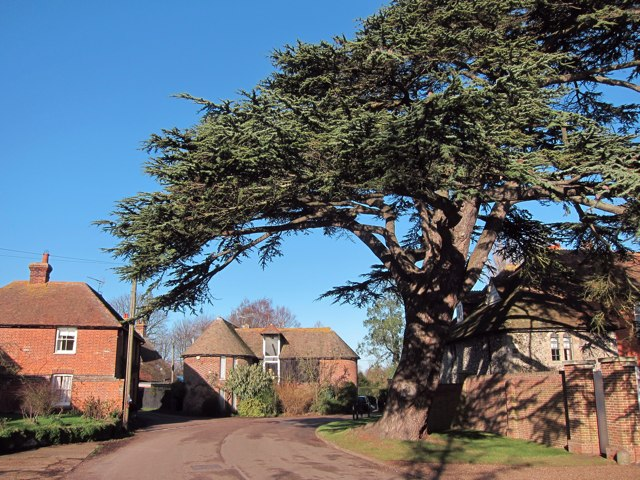 Large tree outside the Old Rectory