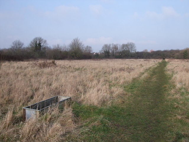 Derelict allotments, Pickard's Small Field