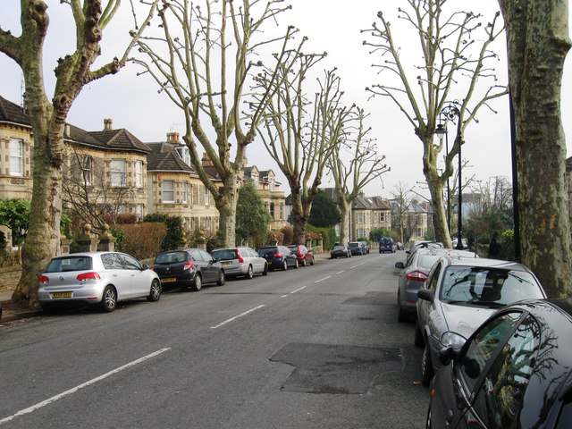 Plane trees, Redland Road, Redland