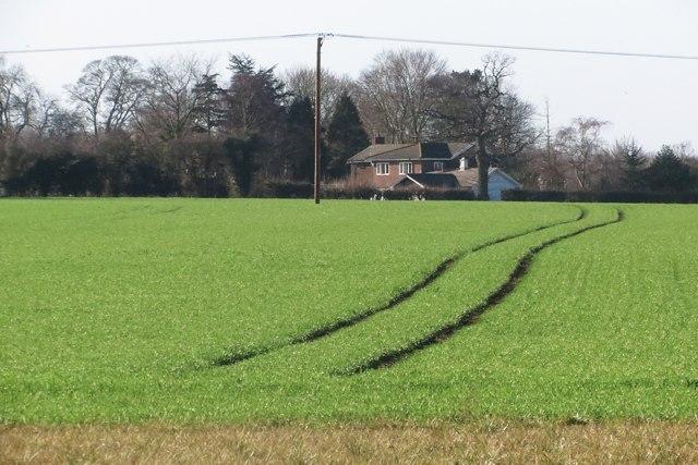 Field at Ickham