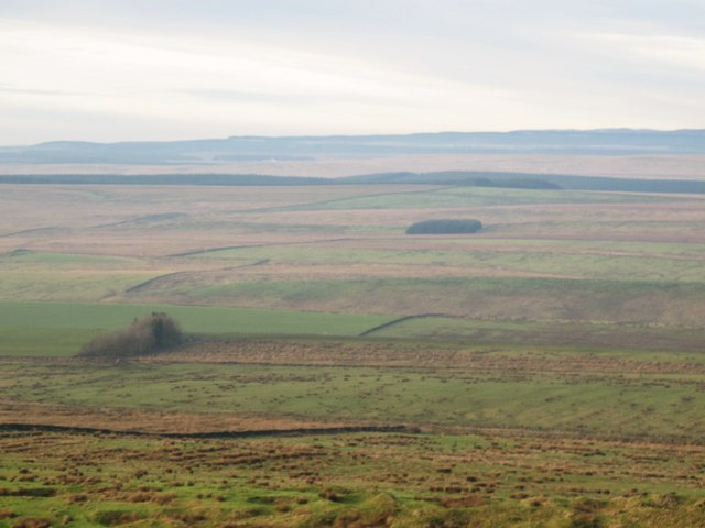 Thirlwall Common (North Side)
