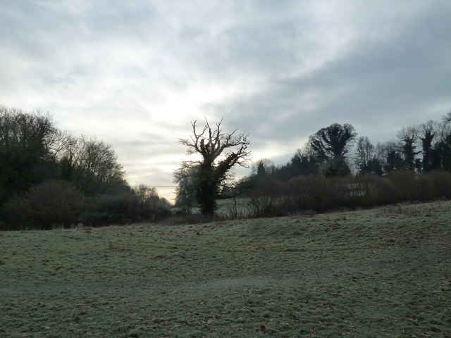 A chilly January morning near Oakhanger Stream (D)