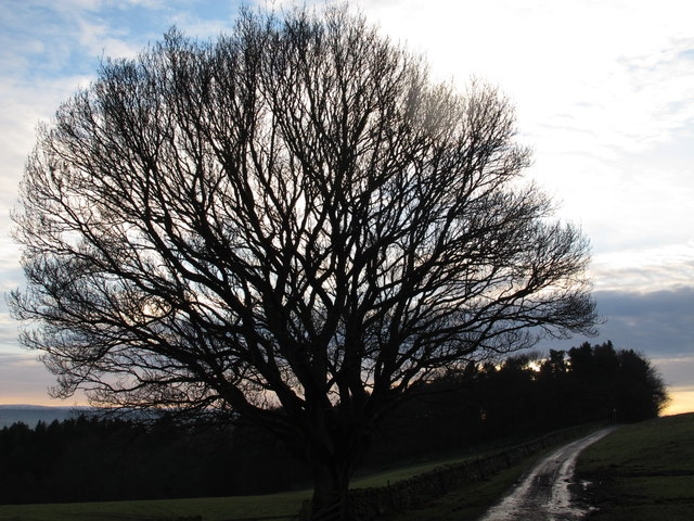 Leafless tree west of Walltown Farm