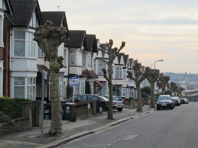Row of lightly pruned trees in Audley Road, NW4