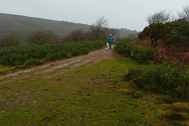 Track in Horner Wood
