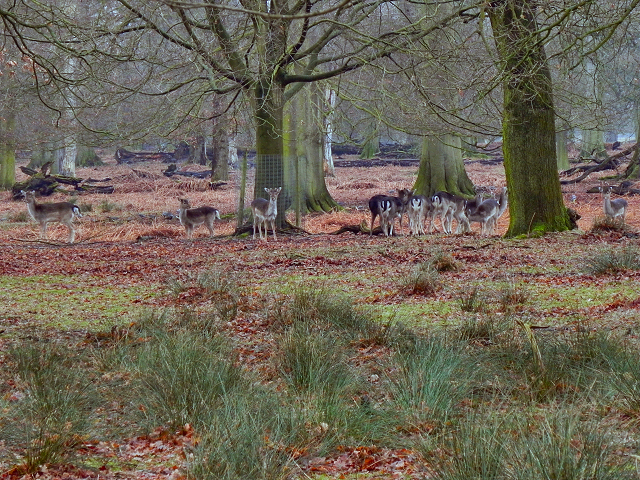 Deer Herd, Dunham Deer Sanctuary