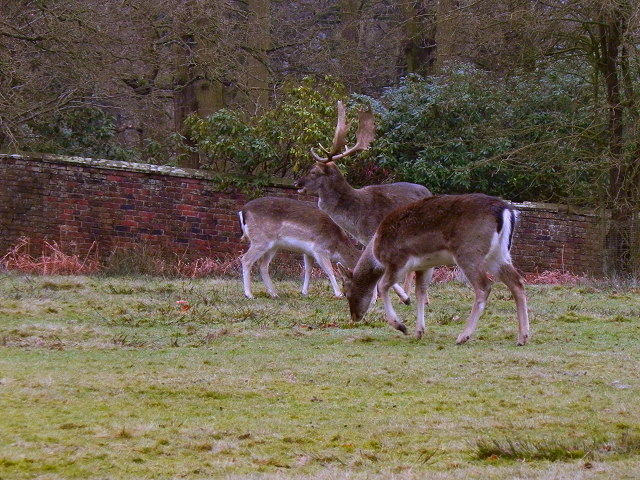 Deer Sanctuary, Dunham Park