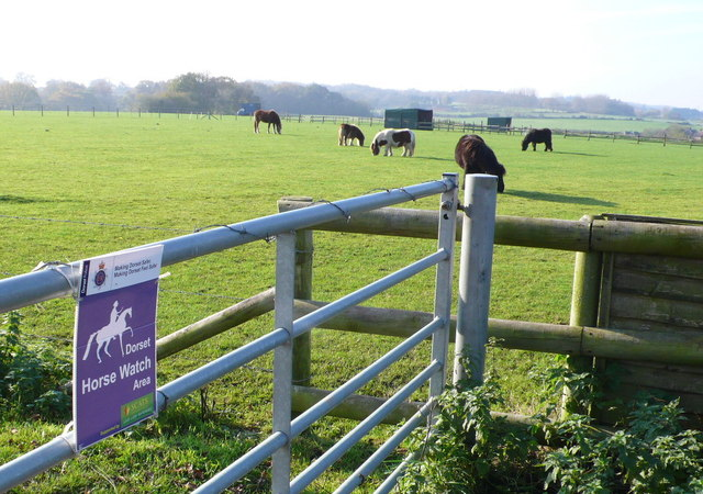 Horse Paddocks near Sleight
