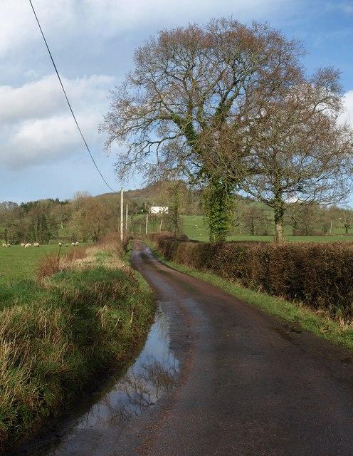 Lane to Shaugh Farm