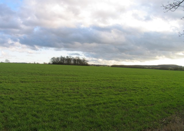 Field by Gaddesby Lane