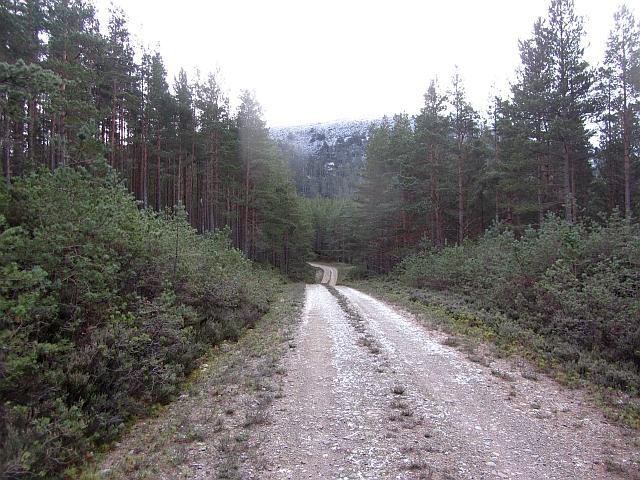 Logging road, Inshriach