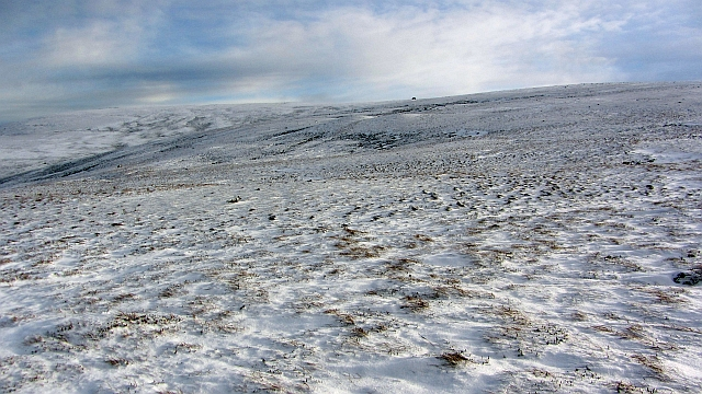 Montane heath on Creag Dubh