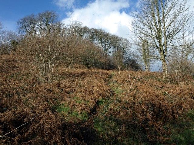 Dumpdon Hill