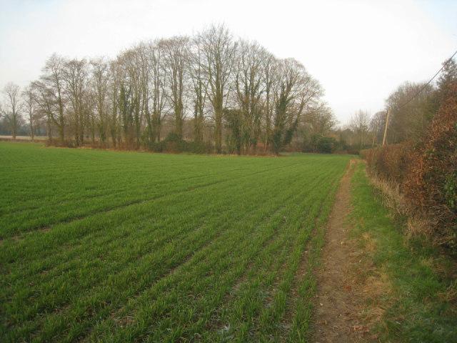 Walking the field margin