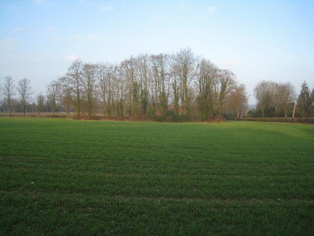 Mini copse in field
