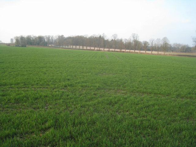 Field west of Oakley village