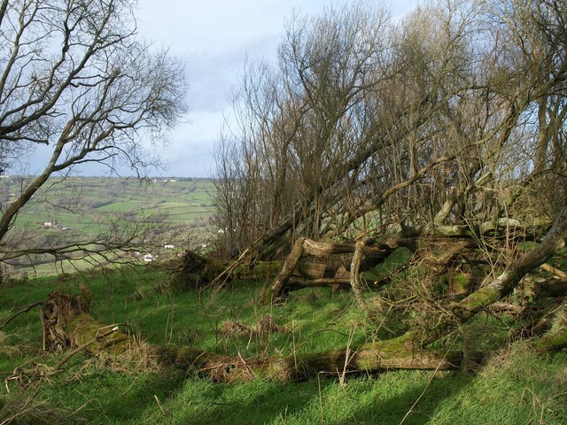 Woodland, Dumpdon Hill