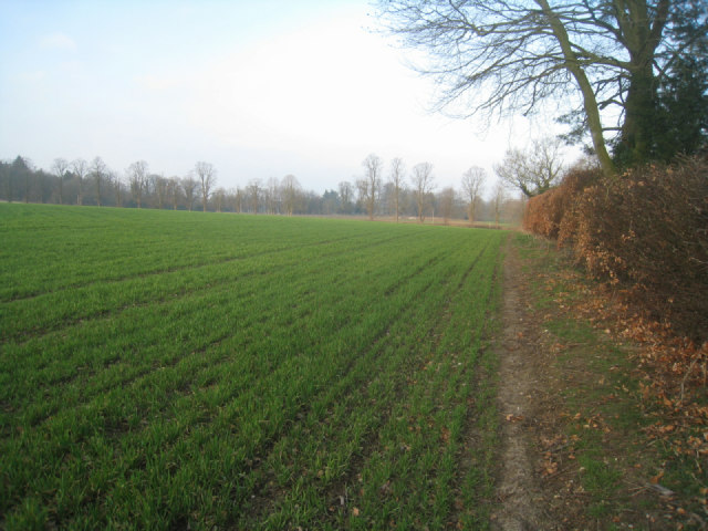 Healthy looking winter crop
