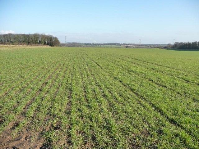 Farmland north-east of the Stanwell Lane footpath