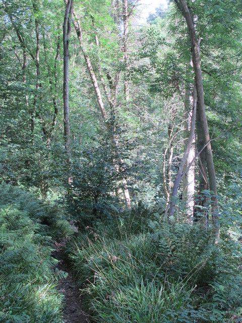 Path in West Dipton Wood (2)