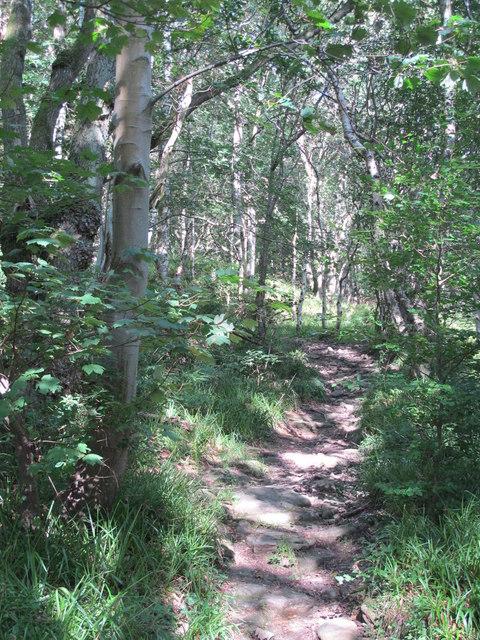 Path in West Dipton Wood (3)