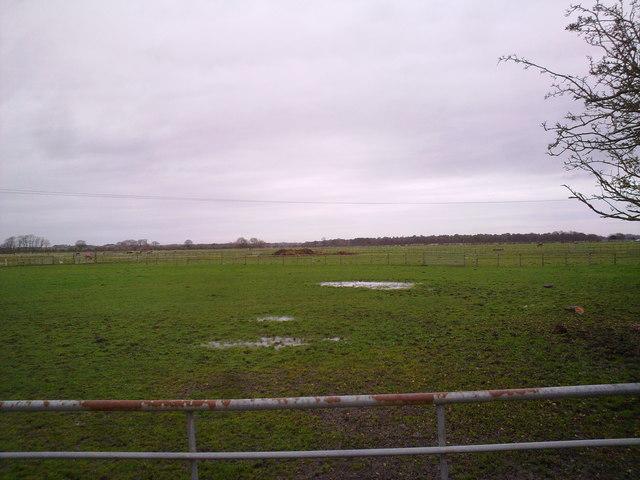 Paddocks near Prestwick Mill Farm