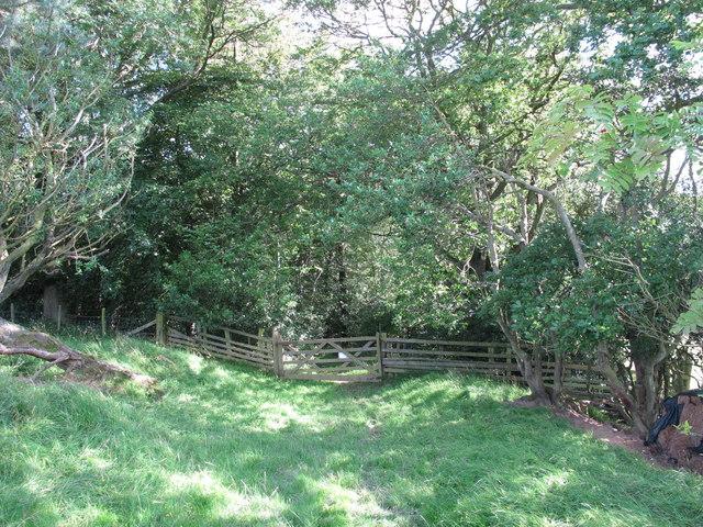 Woodland above West Dipton  Burn