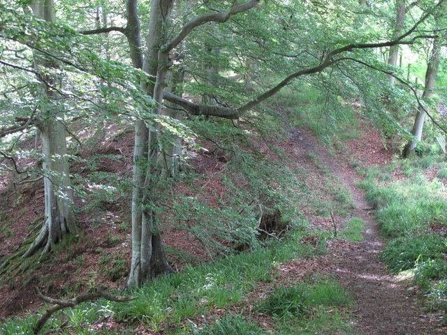 The upper path in West Dipton Wood (2)