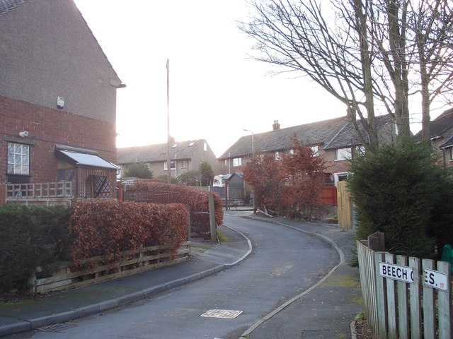 Beech Crescent - Glenwood Avenue