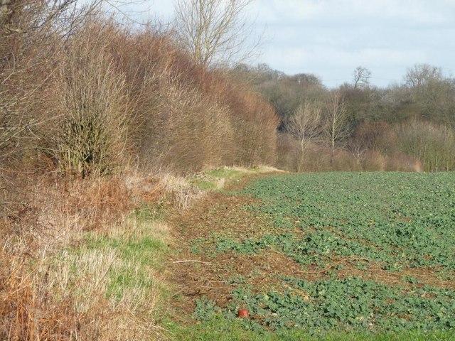 Field edge along Street Lane
