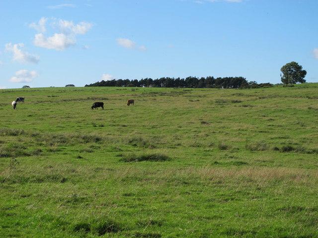 Currick Hill