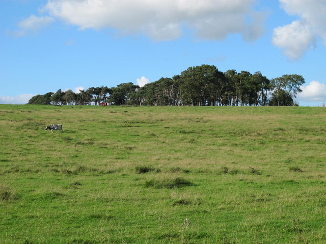 Plantation on Currick Hill
