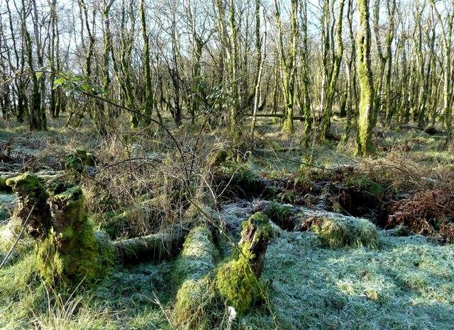 Inside Leffinwyne Plantation