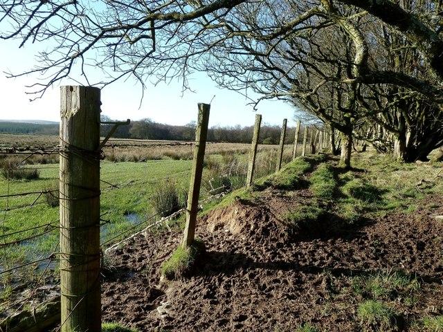 The Edge of Leffinwyne Plantation
