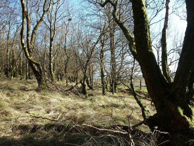 Leffinwyne Plantation