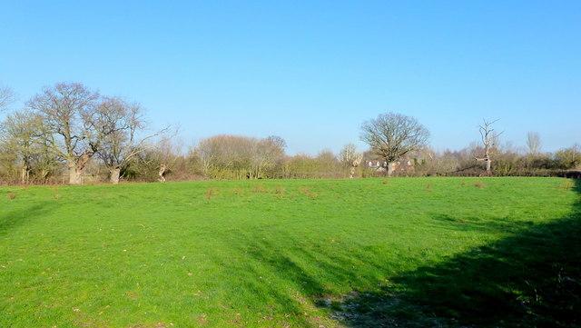 Pasture near Letton