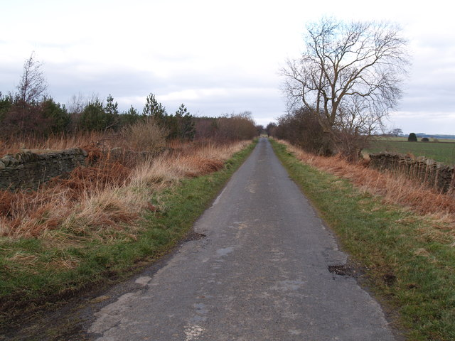Lane between Shotleyfield and Newlands Grange
