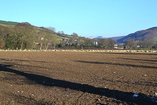 Field near Capel Bangor