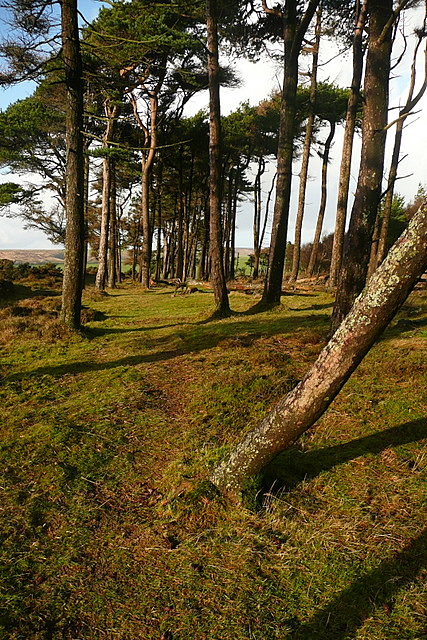 Copse on Stoke Ridge