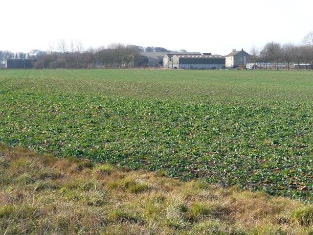 Unfenced crop field, west of Street Lane