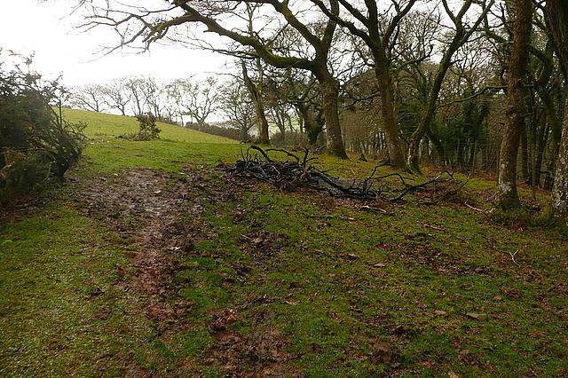 Bridleway towards Stoke Pero