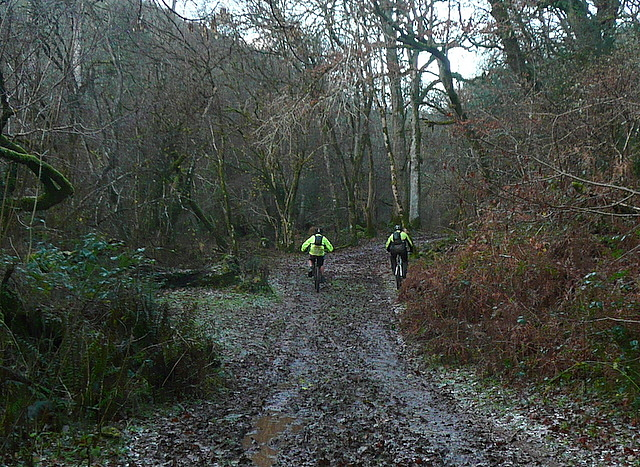 Cyclists in Horner Wood